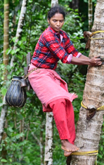 Sheeja - Kerala's only woman toddy tapper